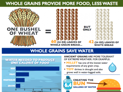 infographic about whole grains and sustainability