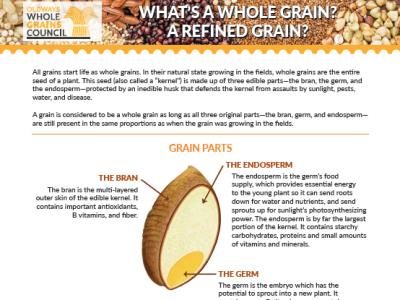 handout comparing whole grains, refined grains, enriched grains