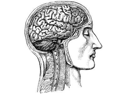 Women's Brains Need Carbs