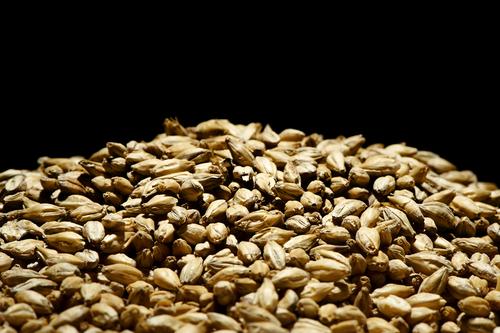 Pile of Barley Malt on black background