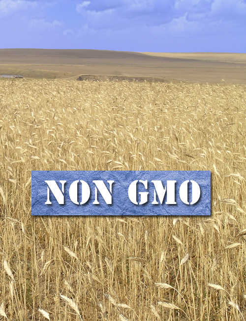 Wheat is not GMO
