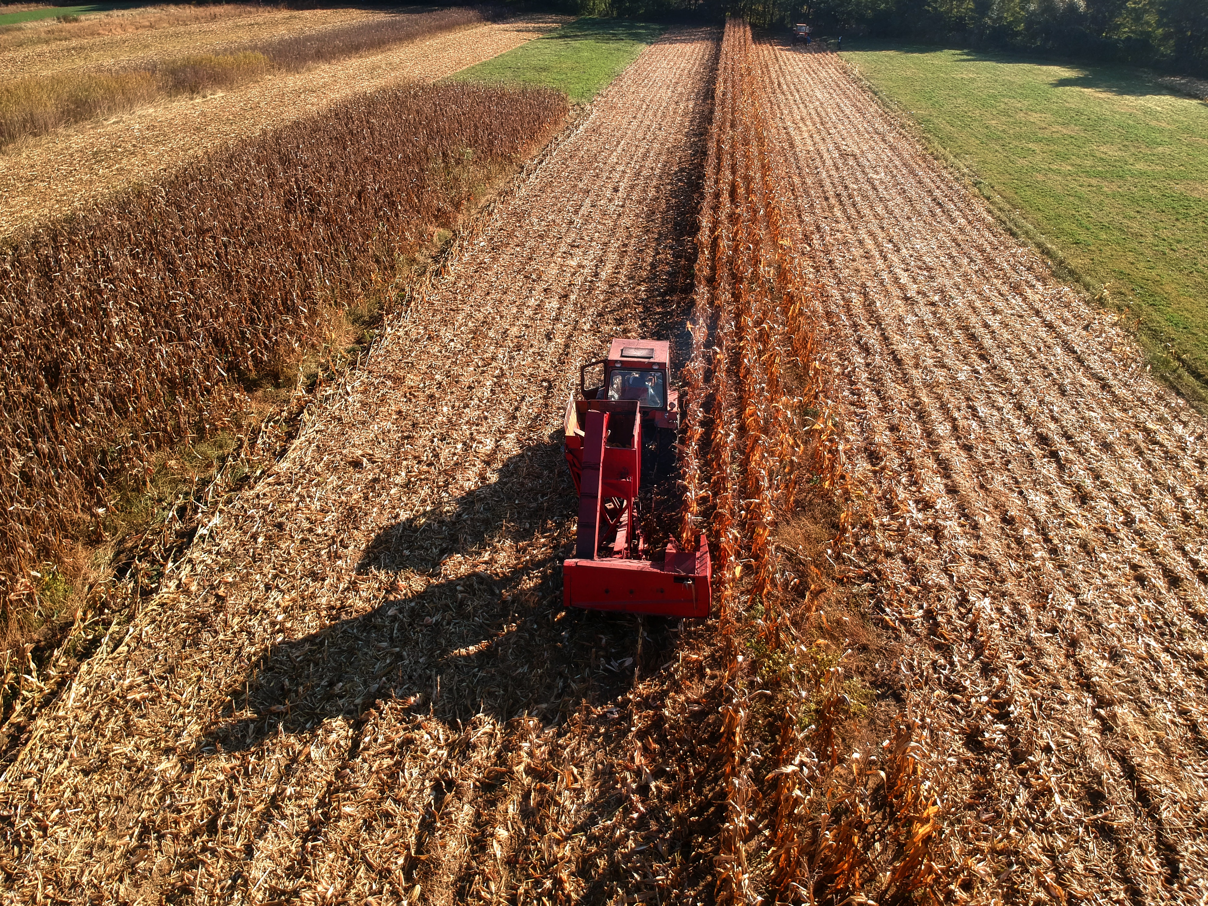 Red tractor harvesting field