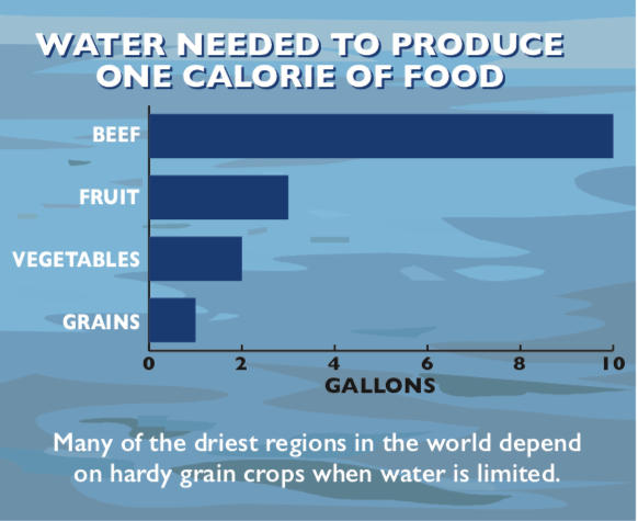 Infographic showing low water requirements for grains