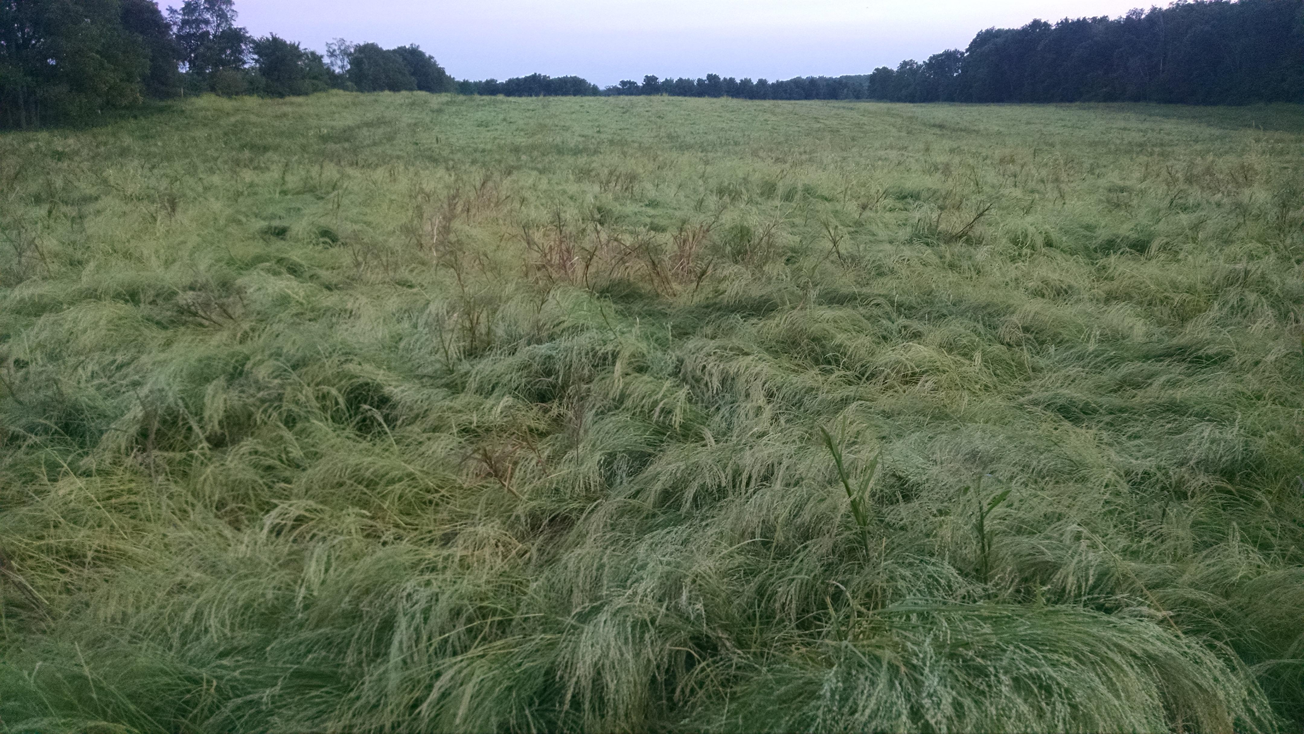 A field of teff
