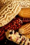 USDA_KeithWeller_corn.img_assist_custom-100x149.jpg