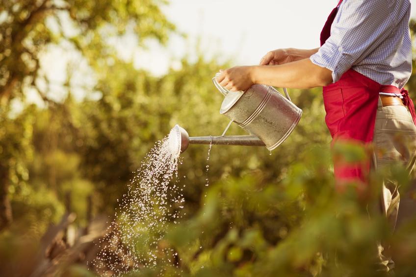 Gardener Fotolia 55915935 S.jpg