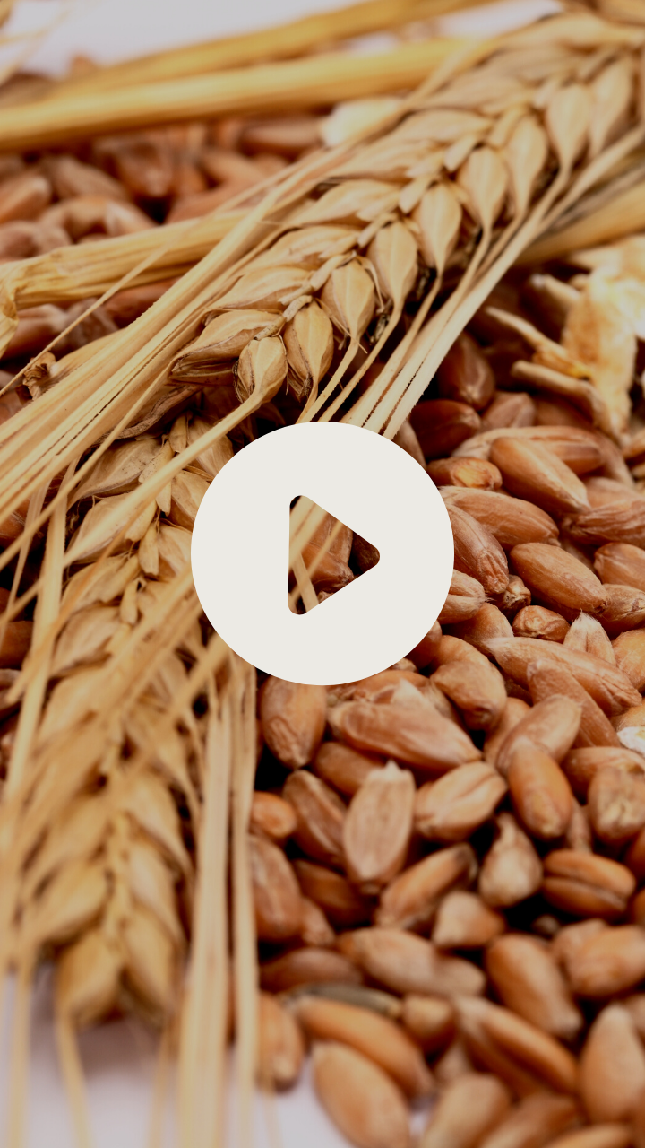 grains video thumbnail-2.png