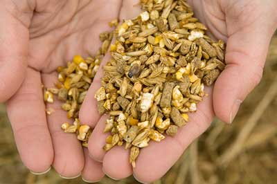 Handful of whole grains